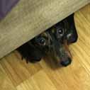 pes smutny pod posteli nahled