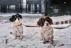 pes zima
