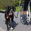 pes bezi u kola nahled