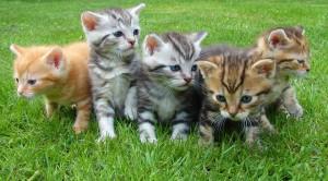kotata for pets