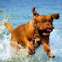 pes ve vode nahled