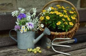 zahrada dekorace kvetiny