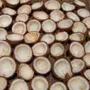 kokosove orechy nahled