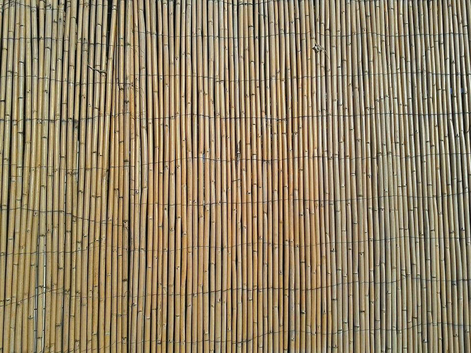 bambusova zastena