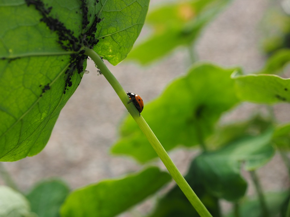msice a slunecko