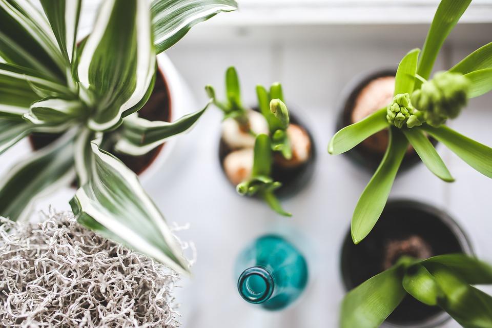 pokojove rostliny jaro