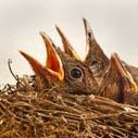 ptak mlade nahled