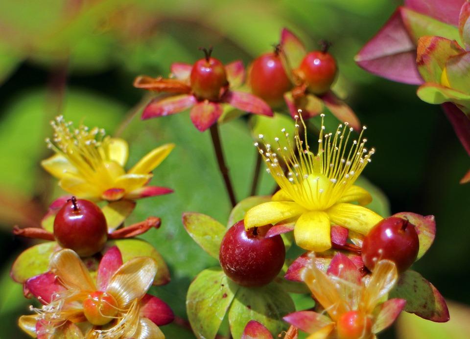 drevite trezalky plody