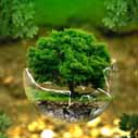 ekologie nahled