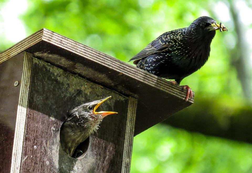 ptaci budka