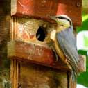 ptaci budka nahled