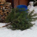 vanocni stromek vyhozeny