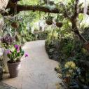 vystava orchideji