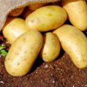 sadbove brambory
