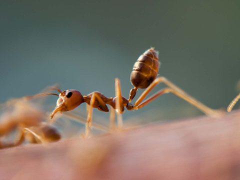 mravenci v byte