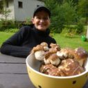 houby v beskydech
