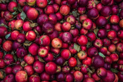 cervivost jablek
