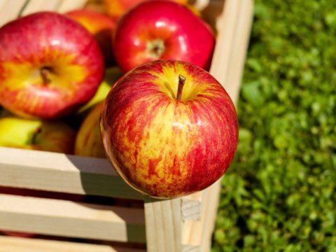 ochrana jablek
