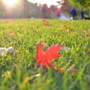travnik podzim