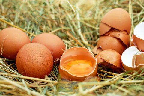 vejce z farmy