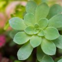 flora olomouc