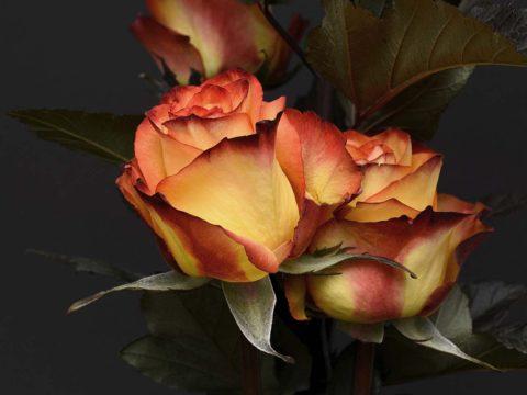 letni flora olomouc