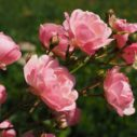 vstupenky flora olomouc 2019