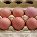 jak poznat cerstva vejce nahled