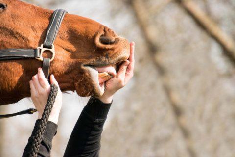 veletrh for horse