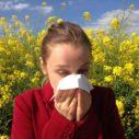 alergie na pyl