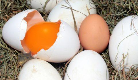husi vejce