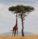 mezinarodni den afriky