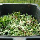 horke kompostovani