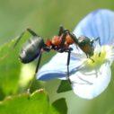 mravenci na zahrade nahled