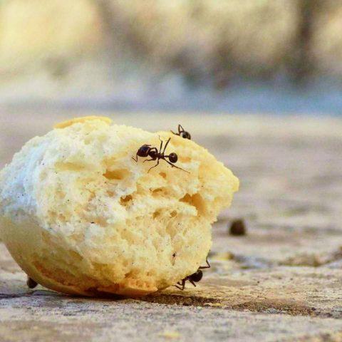 mravenci v interieru