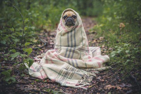 nemoci psu