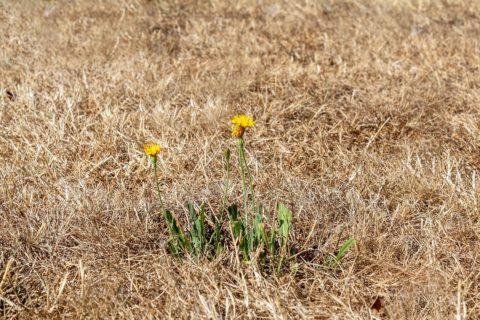 obnova sucheho travniku