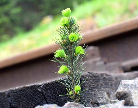 vysadba malych stromecku