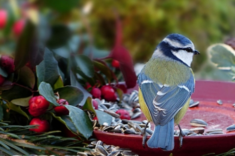 krmenti ptaku na podzim