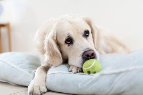 nemocny pes