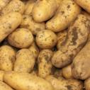 skladovani brambor