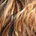 barveni vlasu hennou