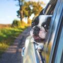 cestovni pojisteni psa