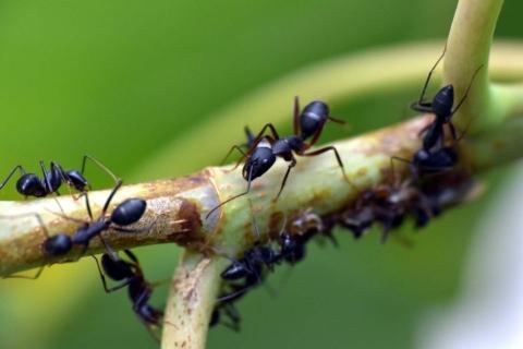cim odpudit mravence