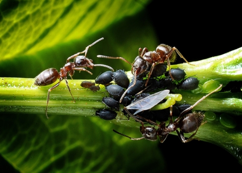 msice a mravenci
