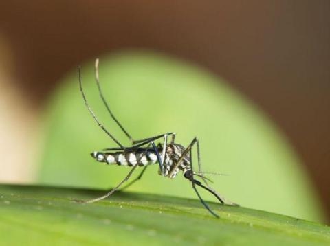 repelent komar