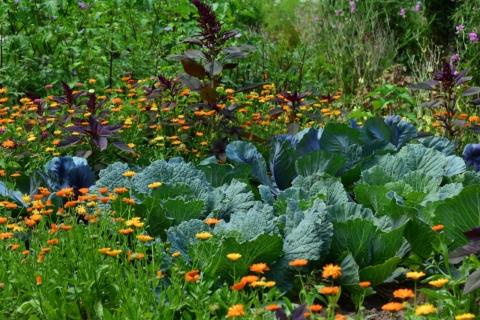 zahrada v lete