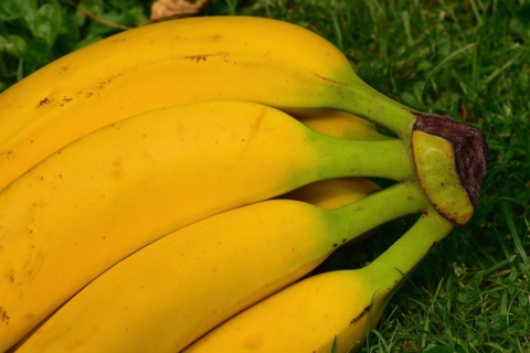 zlute banany se zelenou spickou
