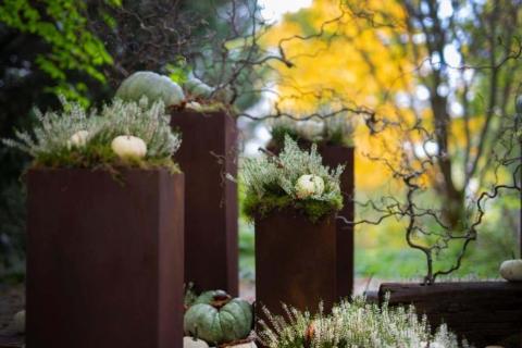 dyne v botanicke zahrade