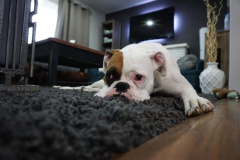 koberec tloustka